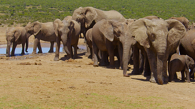 Great Parks of Africa - Addo Elephant National Park