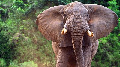 Nomads of the Serengeti - Ngorongoro