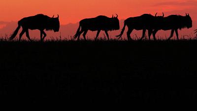 Nomads of the Serengeti - Return to the Mara