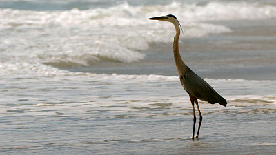 The Living Beach - Florida