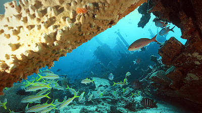 Reef Wrecks - Bonaire