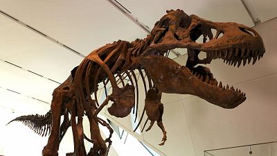 Strange Creatures - Dinosaur Dynamics
