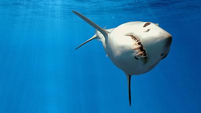 Shark Squad - Chasing Mako
