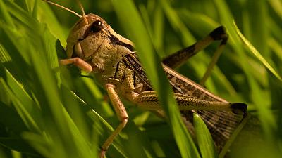 Strange Creatures - Smelly Survival Tactics