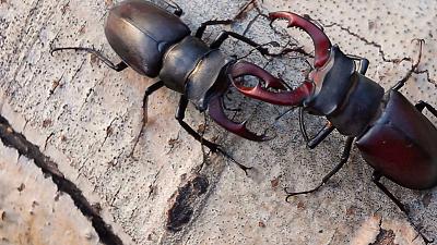 Strange Creatures - Giant Creepy Crawlers