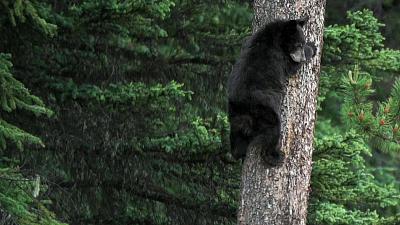 Wild Rockies - Group Survival