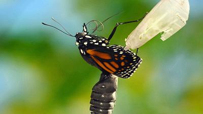 Wild Wild East - Pollinators