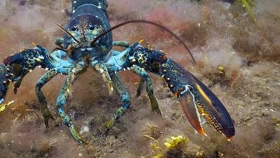 Wild Wild East - Crustaceans