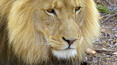 Wildlife Icons - Africa's Big Five