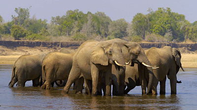 Tales From Zambia - Elephant Valley