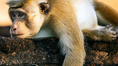 Monkey Island - Leaving Home