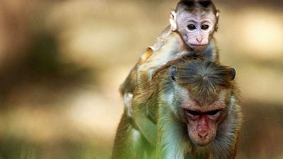 Monkey Island - A Mother's Tale