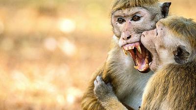 Monkey Island - Trouble in Paradise