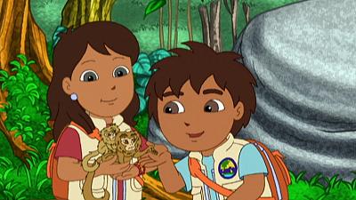 Go, Diego, Go! - A Booboo on the Pygmy Marmoset