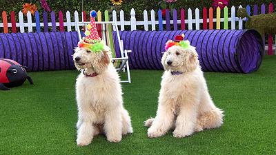 Mutt & Stuff - A Pawsome Circus Show