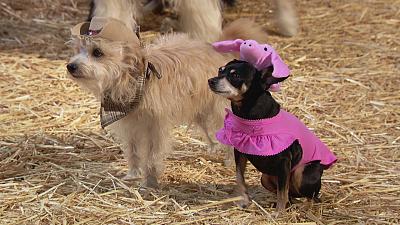Mutt & Stuff - Get Along Little Piggy
