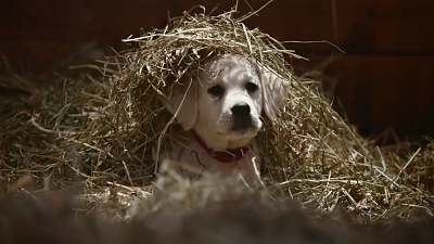 "Super Bowl Greatest Commercials - BUDWEISER - ""Lost Dog"" (2014)"