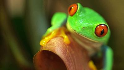 Mysteries of Evolution - Incredible Eye Adaptations