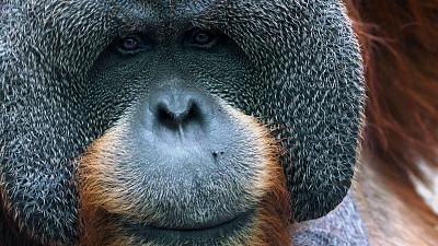 Mysteries of Evolution - Amazing Head Adaptations