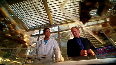 CSI: Miami - Killer Regrets