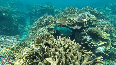 CBS This Morning - Mini-satellites help map Great Barrier Reef