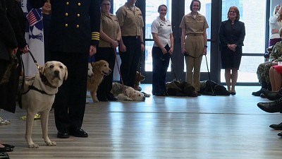 CBS This Morning - George HW Bush's dog Sully still helping vets