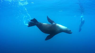 Sunday Morning - Nature: Chilean marine reserve