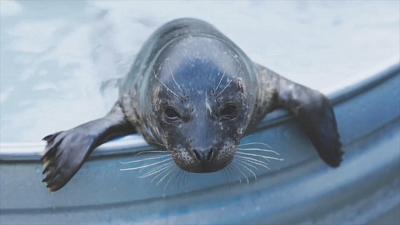CBS This Morning - Veterans with PTSD help injured sea lions