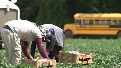 CBS This Morning - Farmers struggle with virus' effect on labor