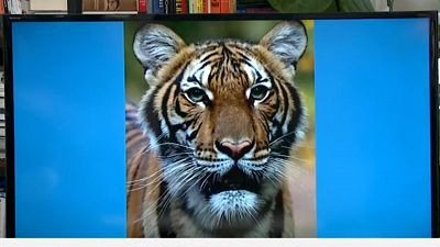 CBS This Morning - Tiger at Bronx Zoo has coronavirus