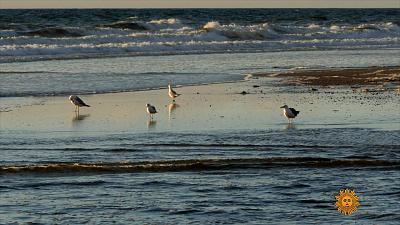 Sunday Morning - Nature: Cape Cod National Seashore