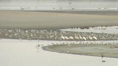 CBS This Morning: Saturday - Massive bird die-off seen in western states
