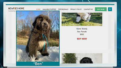 CBS This Morning - Online pet scams skyrocket amid pandemic