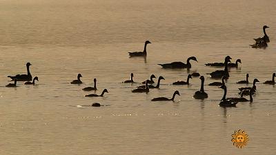 Sunday Morning - Nature: Birds in Montana