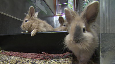 Sunday Morning - Vaccinating bunnies